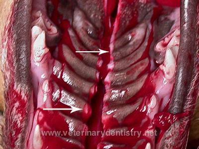 Advanced Oral Surgery.176-Edit